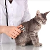 Ветеринарные клиники в Шумерле